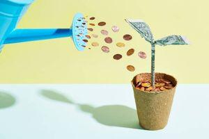 Un arrosoir qui verse des pièces de monnaie dans un pot avec des fleurs en billet de banque.